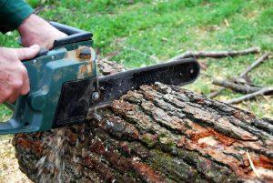 Drewno przeznaczone do toczenia